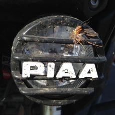 Nevada bug